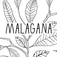 MALAGANA - Cartagena