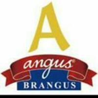 Angus Brangus - Medellín